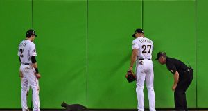 MLB: A Definitive Ranking Of The Best All-Time Cat Moments in Baseball