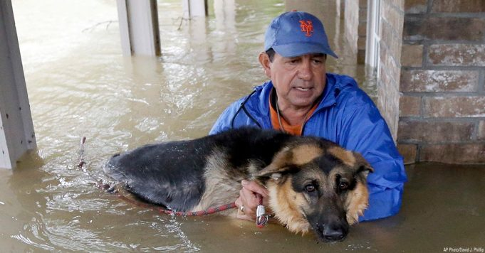 New York Mets Fan, Dog Deliver Highlight Of The Year In Houston