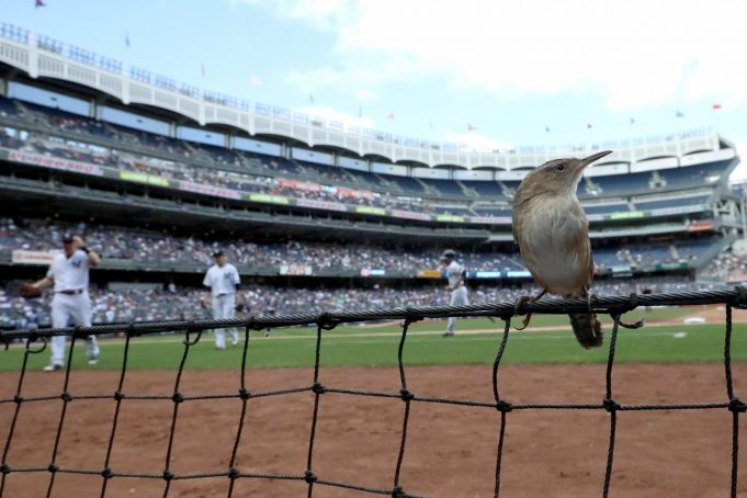 New York Yankees Announce Plan Of Net Expansion
